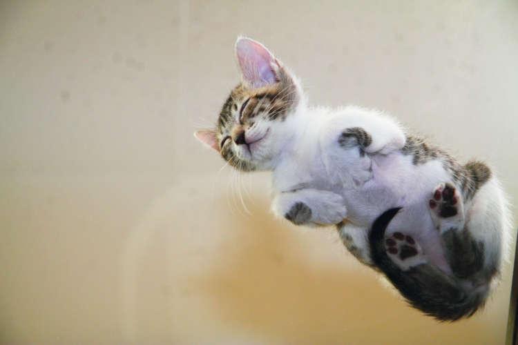 【この猫に会いたい!】真相解明!? ネコの裏側