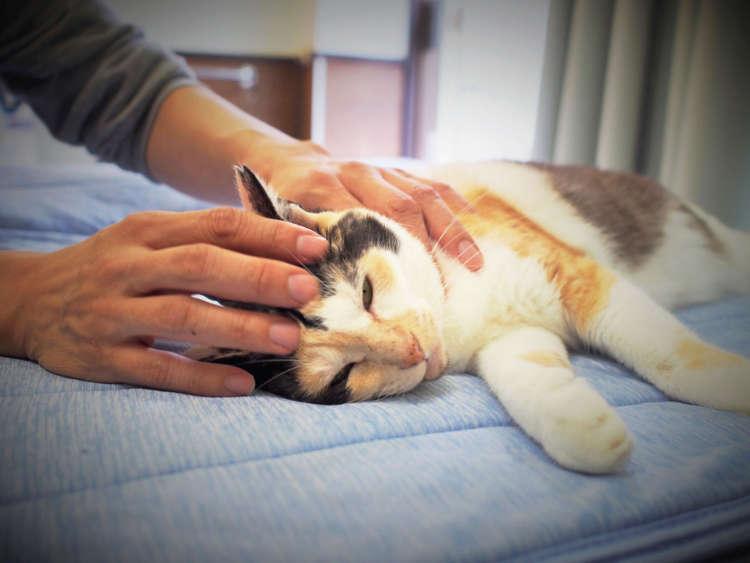 【この猫に会いたい!】猫だって……。