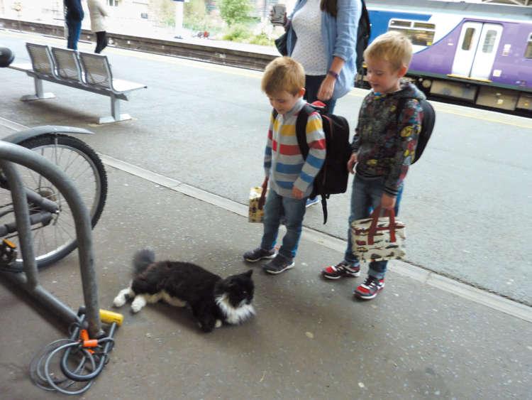 駅の利用客を見守る鉄道ねこ