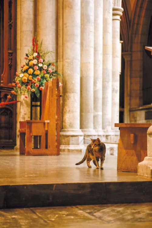 エリザベス女王も、ロンドン市長もこの大聖堂でドーキンスに会いました