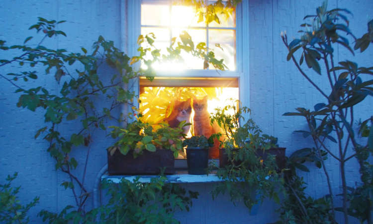 小太朗(左)とチャイ。夕暮れの窓辺で