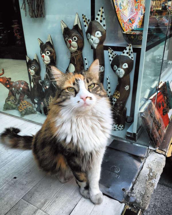 海外旅行先でも被写体はほとんど街猫。イスタンブールにて