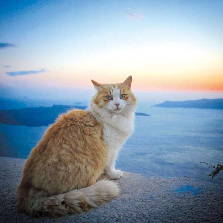 街猫撮影が目的で訪れたギリシャのサントリーニ島にて