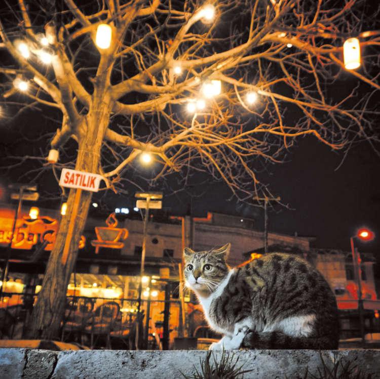 エキゾチックなイスタンブールの夜。街猫が絵になる