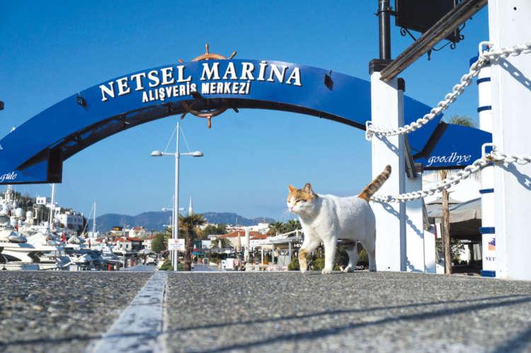 マリーナでも海よりも猫が気になる