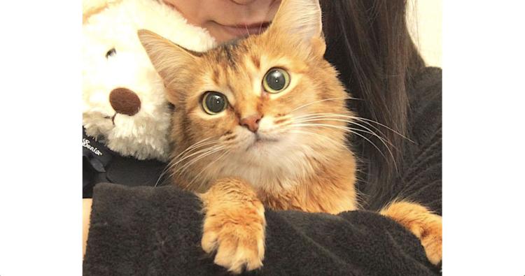 【今週のうちのニャンコ #10】ツンデレなお嬢様ニャンコのミミちゃん… 家族想いな一面にほっこり♡