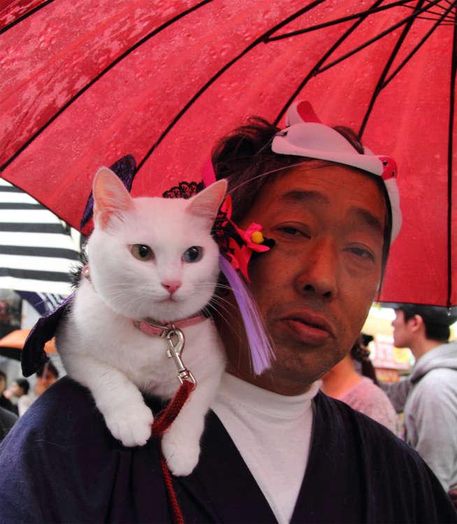 【猫びより】毎年恒例! 神楽坂化け猫フェスティバル【神楽坂】(辰巳出版)