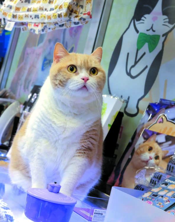 やっぱりあにきは店長の貫録十分(Photo by Wing Chan)