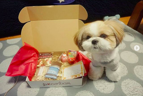 Image result for shih tzu 犬 多くのおもちゃで遊ぶ