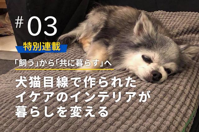イケアのペットライン「ルールヴィグ」で、愛犬との暮らしがもっと素敵に!