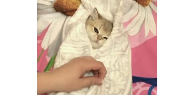 【うっとりしちゃうニャ。】タオルで包まれた子猫ちゃん。このあと見せた、安心した表情が…(♡o♡)