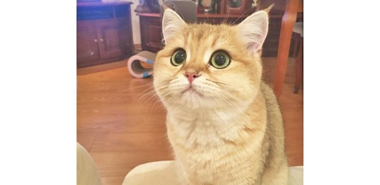 もっちりぷくぷく♪ 思わず食べたくなっちゃう、丸顔ニャンコさんが可愛すぎて…(*´﹃`*)♡