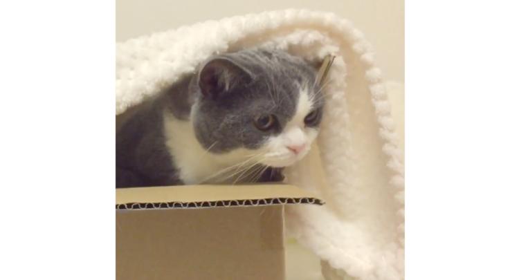 ダンボール箱に入ってくつろぐニャンコ → 同居猫がやってくると、いたずら心に火がついて…(笑)