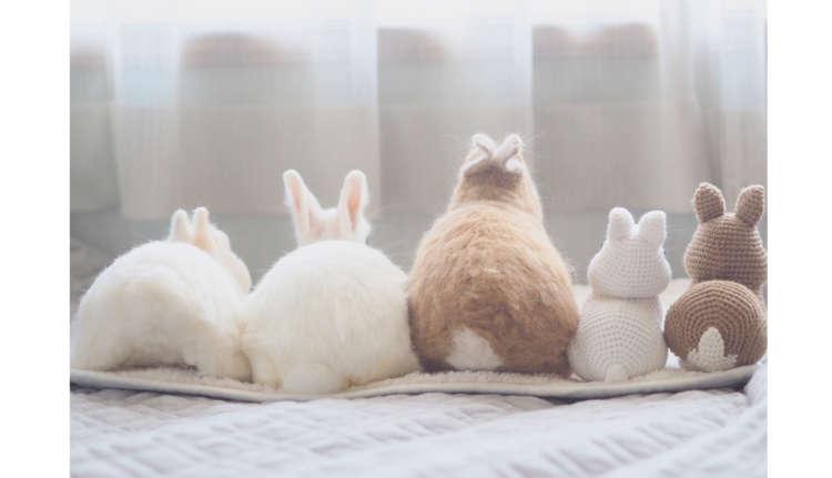 【いつでもピタッと♡】なかよしウサギコンビの日常は、ピタッと密着の連続だった… (*´ェ`*)