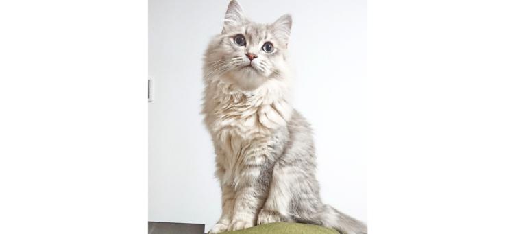 【今週のうちのニャンコ #13】電話もかけちゃう!? どんなものにでも好奇心旺盛な猫、ポン太くん