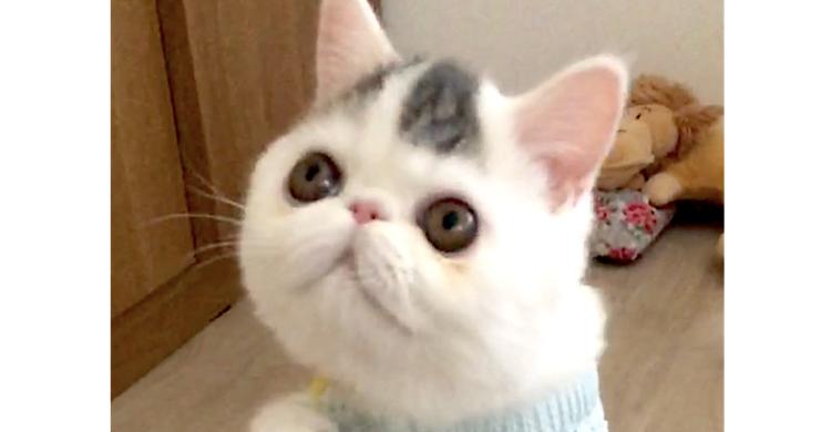 【奇跡のパッツン前髪】前髪のような模様をもつ猫♡何をしてても、愛くるしくてトキメキが止まらない!