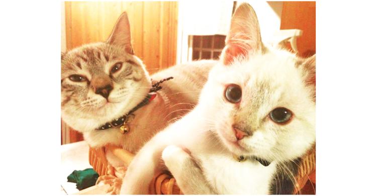 """「弟ができたニャ」一足違いでやってきた、保護猫を弟として受け入れた兄の """"溺愛ぶり"""" が見てて和む♡"""