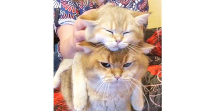 マッサージされる猫の『土台』になる猫 → しかし、自分の番になると、不満顔がコロっと変わって…♡