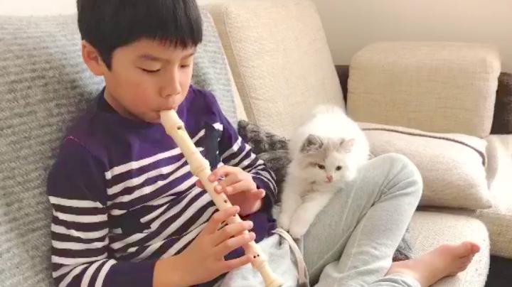 【あたしと遊ぶニャッ!】お兄ちゃんのリコーダーをじっと聴く子猫。→ でも、我慢できず…♡