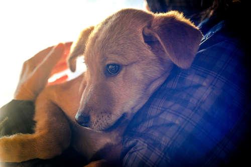 犬の尿崩症 考えられる原因や症状、治療法と予防法