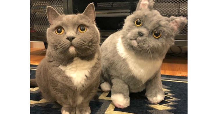 Instagramで人気な猫、おまめさん! プレゼントされた『友だち』への反応が可愛かった…♡