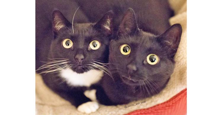 【黒猫ワールドにようこそ♪ 】おもわず見惚れてしまう黒猫たちが大集合♡ …ごゆっくりご堪能ください♪
