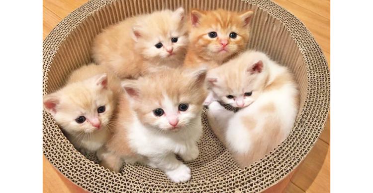 【アイドルすぎる子猫たちが大集合!】胸のドキドキが止まらない! 恋心を味わえる写真集♡ 8枚