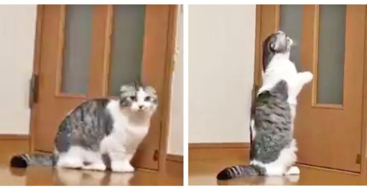 出張中のパパを見つけ出したいネコさん。扉を開けてとお願いする姿が、健気だった… (´;∀;`)♡