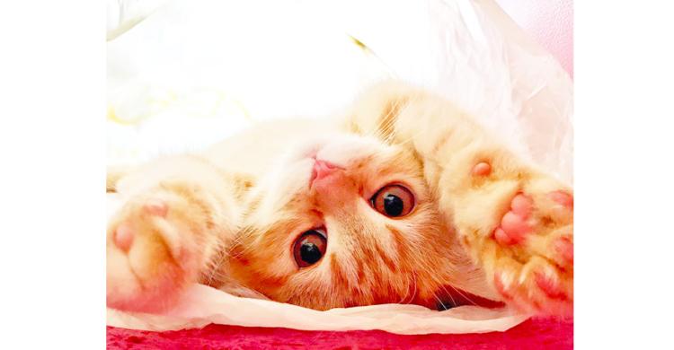 【この表情は反則級!】美ニャンコの子ネコ時代に、タイムスリップしてみたら… やっぱり可愛かった♡