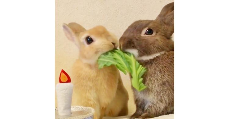 【このままだと、キスしちゃう!?】キャベツを食べるウサギたち。まさかの展開に…思わずクスッ笑