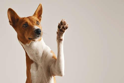 犬が人間の喧嘩に割り込んで仲裁する理由とは?
