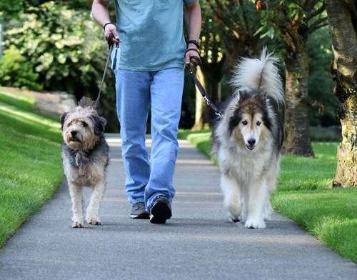 犬が前肢を高く上げる原因と対策