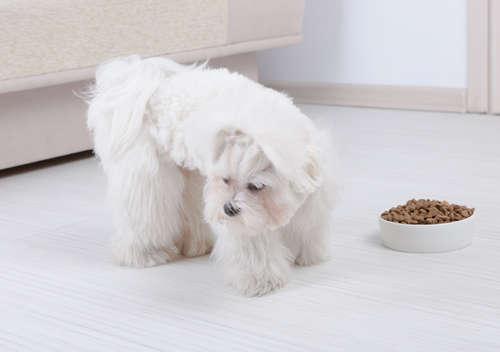 犬がエサを食べなくなる原因と対策