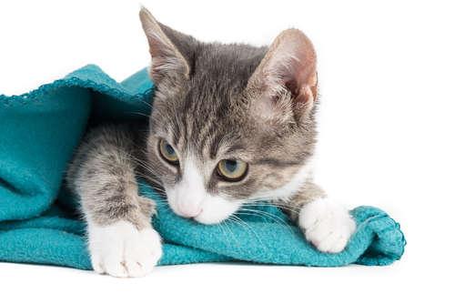 【獣医師監修】一体なぜ? 猫が毛布をチュパチュパ吸う意味と対策について