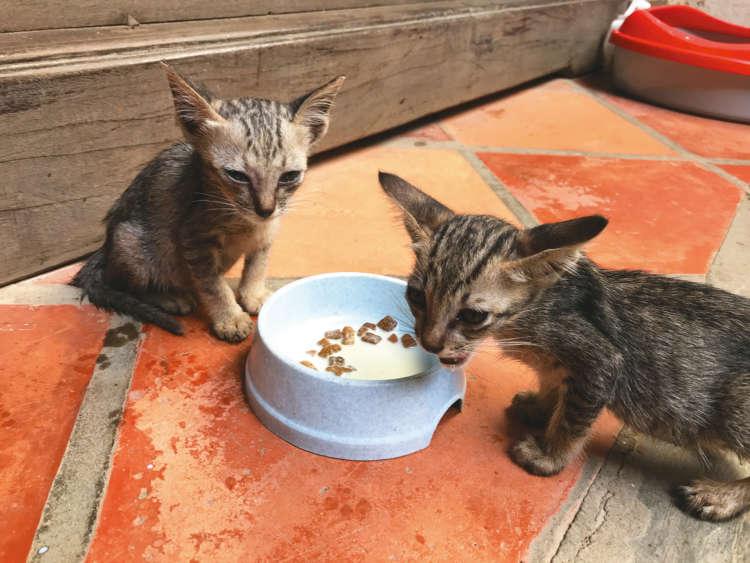 【猫びより】猫好きスタッフがお出迎え! ホイアンの素敵なギフトショップ 【from Vietnam】