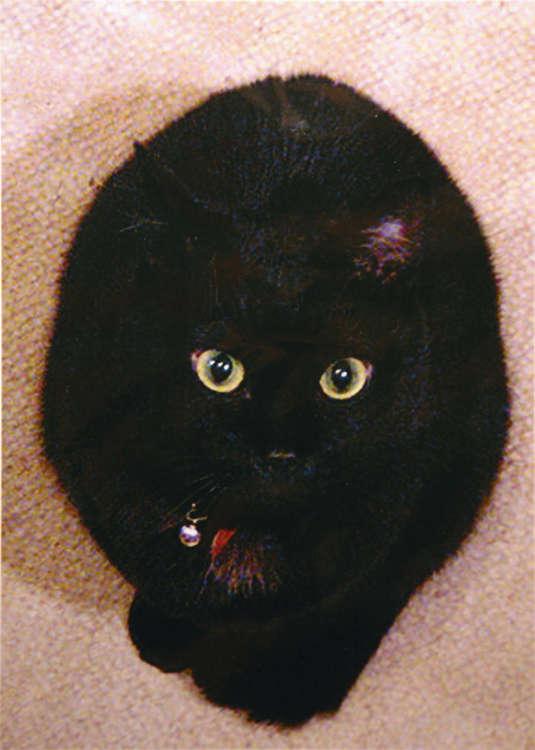 同居猫のびびちゃん。客人が来るとダッシュで逃げる(写真・山田あおい)
