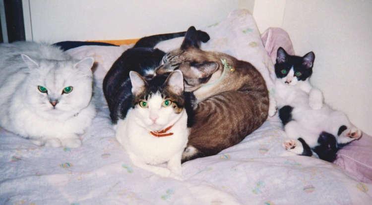 幼い頃のちょび(右)。持ち前の穏やかな性格で先住猫たちともすぐに馴染んだ(写真提供・山田あおい)