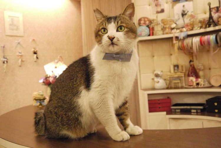 【猫びより】とらさんが起こした小さな奇跡【原宿】(辰巳出版)