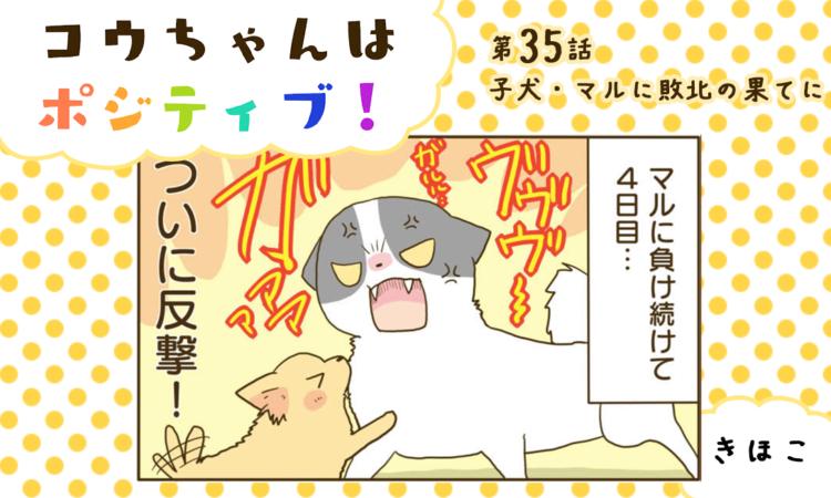 【まんが】第35話:【子犬・マルに敗北の果てに】まんが描き下ろし連載♪ コウちゃんはポジティブ!