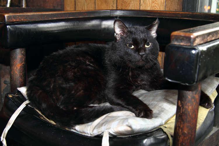貫禄たっぷりの黒猫と思いきや、実は超おしゃべりで甘えん坊