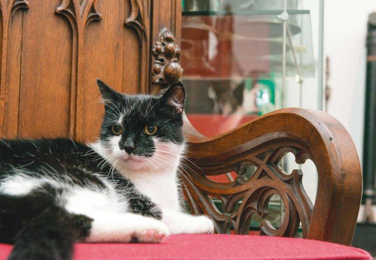 博物館の住み込みガイド猫