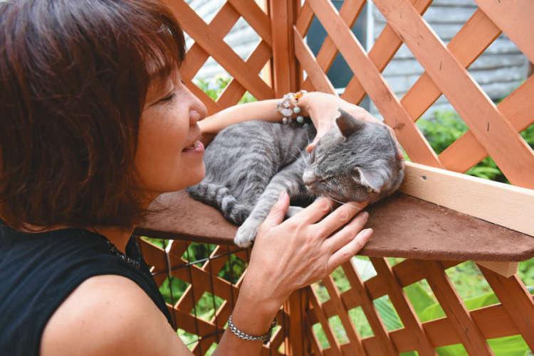 猫部屋コーナーでくつろぐグレちゃんを愛でる左知子さん