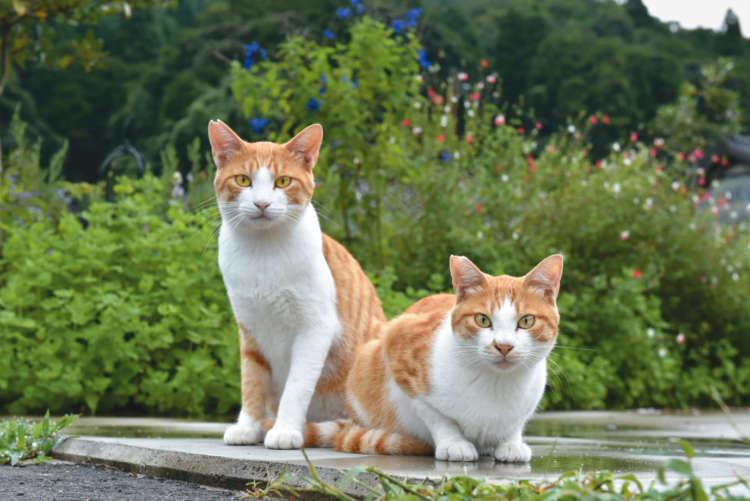 【猫びより】地域猫カフェへと成長――里山カフェ「そらいろのたね」【from Japan】(辰巳出版)