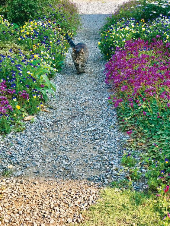 母が育てたお花をたまーに踏みつけながら走ってくることも