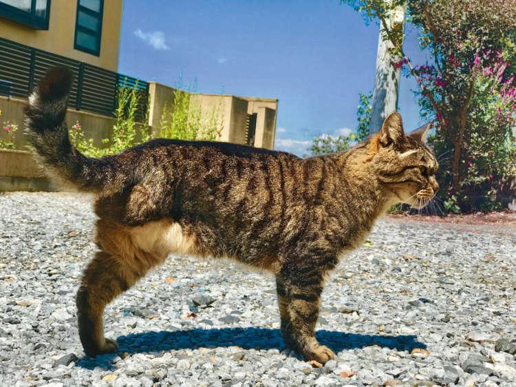 【君に金メダル! 我が家のご長寿猫】おチビ(21歳)3本足も何のその。夜遊び大好き!