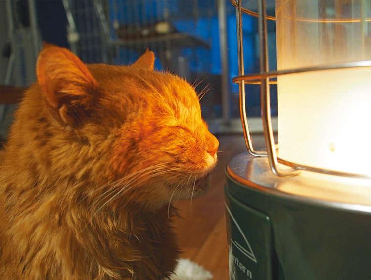 【猫びより】【君に金メダル! 我が家のご長寿猫】みよちゃん(19歳)子分が2匹。マイブームはお風呂。