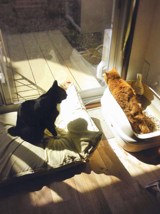 みよ姐さんのトイレの後始末をすべく、待機するクロ(写真提供・田原由子)