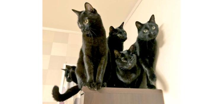 【黒猫による、黒猫の為の会議。】秘密のミーティングをする黒猫たち。…その姿がとても興味深かった!