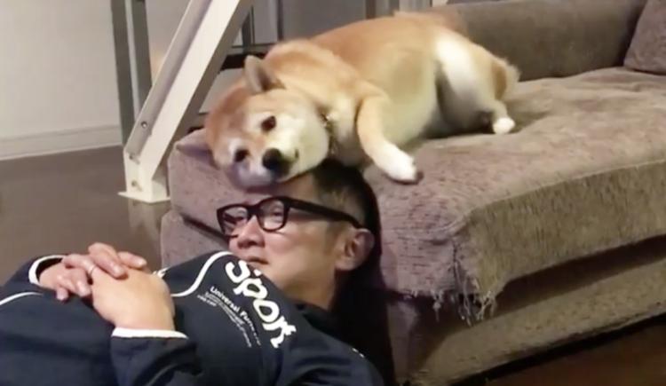 【愛を込めてマッサージ♡】大好きなパパの頭をペロペロしていた柴犬。しかし、愛が溢れ出した結果 …笑