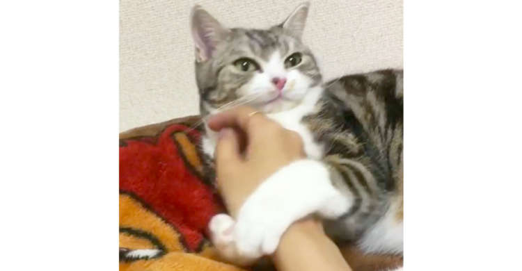 【離れニャいで♡ 】飼い主さんの腕にしがみついて、はなさない猫が…たまらなく可愛かった!(*´﹃`)